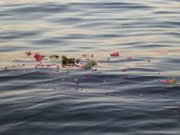 Flores en el Mediterráneo
